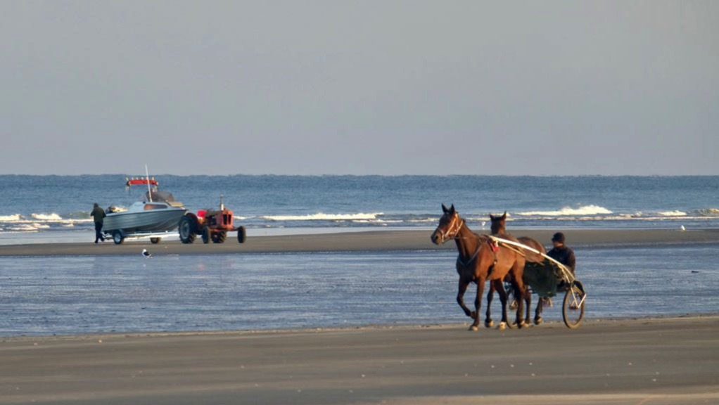 Horses and boat at the estuary.